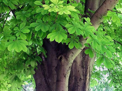 Дерево знака зодиака стрельца